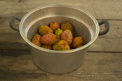 Many prickly pears in a large aluminum pot. royalty free stock photo