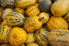 Many pumkins Stock Photography