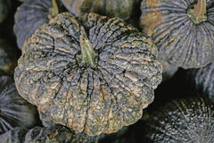 Many pumkins on sale stock images