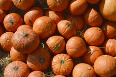 Many pumpkin from farm background Stock Photos