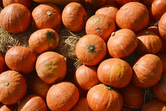 Many pumpkin from farm background Stock Images