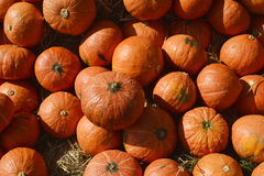 Many pumpkin from farm background Royalty Free Stock Photo
