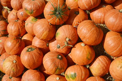 Many pumpkin from farm background Royalty Free Stock Photos