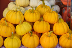 Many pumpkin on the table at market. Royalty Free Stock Image