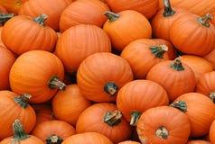 Many pumpkins Stock Photos