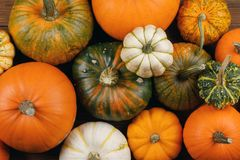 Many Pumpkins background Royalty Free Stock Photo