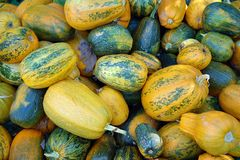 Many pumpkins of different colors. As a natural background royalty free stock image