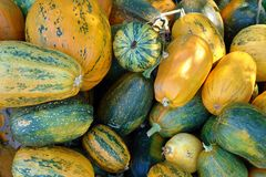 Many pumpkins of different colors. As a natural background stock photos