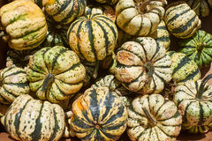 Many pumpkins in the fair Stock Images