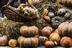 Many pumpkins on a farm scene. Many different colour and sizes pumpkins on a farm scene close up stock photos