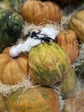Many pumpkins on a farmers market. For cooking or ornamental royalty free stock photo