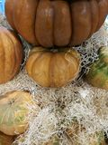 Many pumpkins on a farmers market. For cooking or ornamental royalty free stock photography
