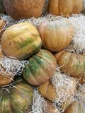 Many pumpkins on a farmers market. For cooking or ornamental royalty free stock image