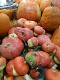 Many pumpkins on a farmers market. For cooking or ornamental stock photography