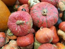 Many pumpkins on a farmers market. For cooking or ornamental stock photo