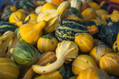 Many pumpkins on a farmers market stock image