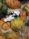 Many pumpkins on a farmers market. For cooking or ornamental stock photos