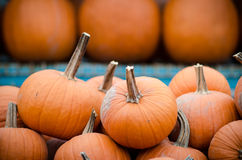 Many pumpkins Royalty Free Stock Photography