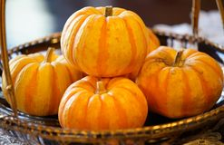 Many pumpkins. Which were displayed in the basket on the table royalty free stock image