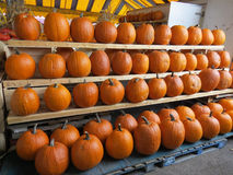 Many pumpkins at market for Halloween. Assortment of orange pumpkins for jack o' lanterns at farmers' market for Halloween Royalty Free Stock Photo