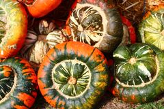 Many pumpkins. The picture shows many pumpkins stock photos