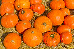 Many of the pumpkins Royalty Free Stock Image