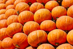 Many of the pumpkins Royalty Free Stock Images