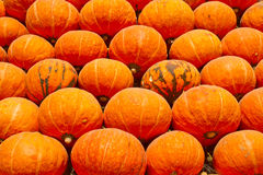 Many of the pumpkins Royalty Free Stock Photos