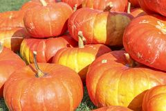 Pumpkins at the Pumpkin Patch Stock Images