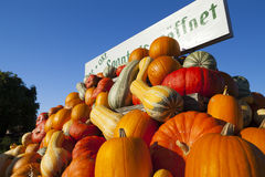 Many pumpkins for sale Stock Images
