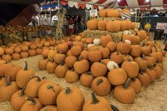 Many Pumpkins selling at a pumpkin patch royalty free stock photos
