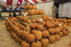Many Pumpkins selling at a pumpkin patch stock images