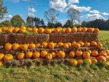 Many pumpkins on straw for sale. Many shiny Halloween pumpkins at a stall waiting for buyers royalty free stock photo