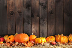 Many pumpkins Stock Images