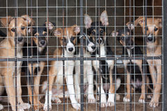 Many puppies locked in the cage Stock Photo