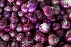 Many purple onions root vegetable raw Stock Photo