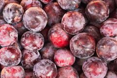 Many purple plums Royalty Free Stock Images