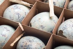 Many quail eggs in a cardboard packaging. Easter greeting card. Happy Easter. Space for text. Top view royalty free stock photo