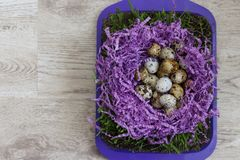 Quail eggs. Many quail eggs lie on the violet decor in the form of a nest, on the green grass that grows in the ground on a tray standing on a table Royalty Free Stock Image