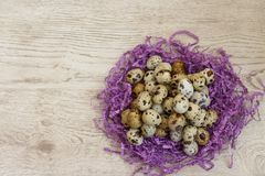 Quail eggs. Many quail eggs lie on the violet decor in the form of a nest on a table Royalty Free Stock Images