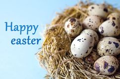 Many quail eggs in a nest of straw on a blue background. stock image