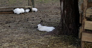 Many rabbits on the farm. Young rabbits sitting in a hutch. Agriculture. 4K stock video footage