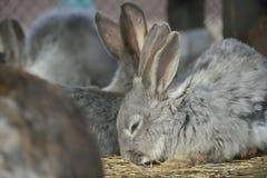 Many rabbits Royalty Free Stock Image
