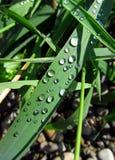 Many raindrops Stock Photo