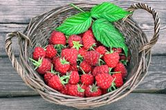 Many Raspberries in basket Stock Images