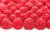Many raspberry berries isolated on white. Many natural raspberry berries isolated on white background. copy space Royalty Free Stock Photography