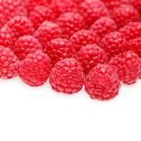 Many raspberry berries isolated on white. Many natural raspberry berries isolated on white background. copy space Royalty Free Stock Image