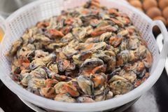 Many raw mussel prepare for cook is mussel pancakes. Or Oyster omelette Hoi Tod in local street food market Thailand Stock Photo