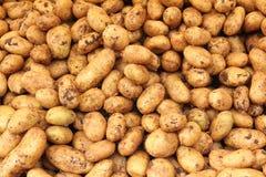 Many raw potato. Food background Stock Photos