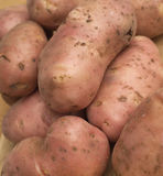 Many raw red potatoes closeup Royalty Free Stock Images